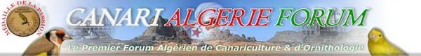 Canari Algérie Forum
