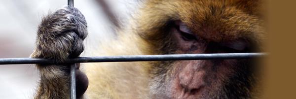 Pour une interdiction définitive de l'expérimentation animale - Fondation 30 Millions d'Amis