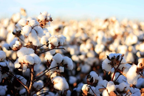 Why to use organic cotton for babywear