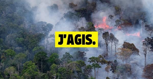 Déforestation en Amazonie : stop au massacre !