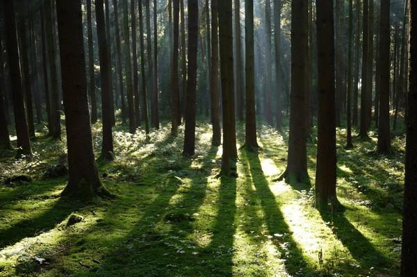Forêts publiques: l'État réfléchit au démantèlement de l'ONF