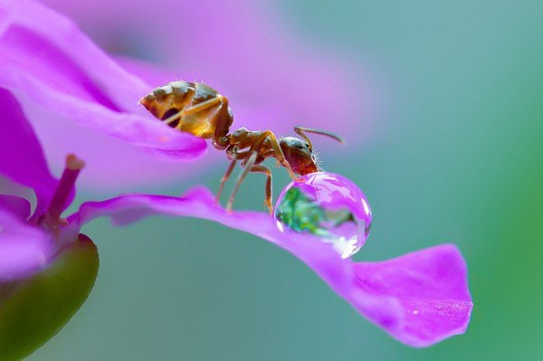 Macro photography of the insects by Nordin - NICE PLACE TO VISIT