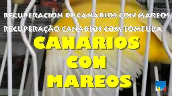 Recuperación de Canarios con Mareos