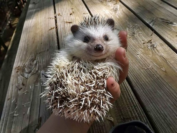 picture of baby hedgehog which might make you feel perfect - NICE PLACE TO VISIT