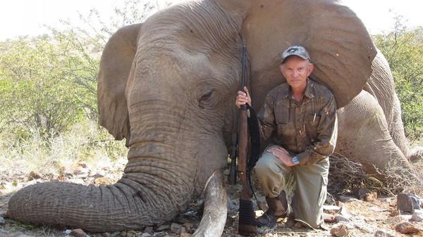 La chasse aux éléphants, nécessaire pour «réguler» les populations animales?