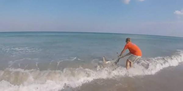 Il sauve un requin à mains nues