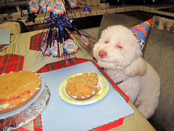 Look! Many Pets Showing Better Birthday Parties Than You - NICE PLACE TO VISIT