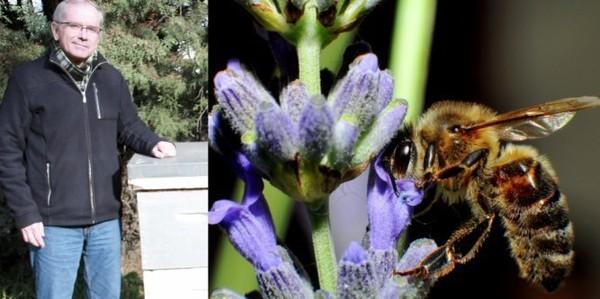 L'OPINION DU WEB - Faut-il interdire les pesticides pour sauver les abeilles ?