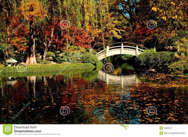 Feuillage et couleur de jardin d'automne