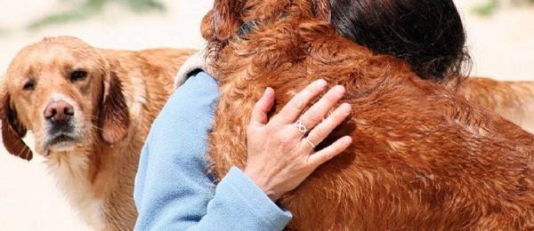 """Les animaux reconnus comme des """"êtres vivants doués de sensibilité"""""""