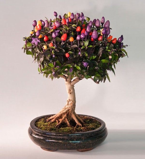 Beautiful Bonsai trees you've never seen - NICE PLACE TO VISIT