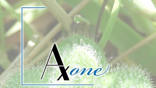 Axone - Frédéric HEBERT - Google+