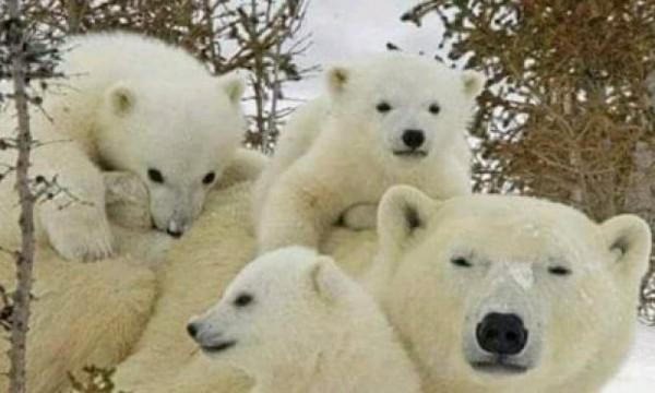Booster la diffusion de la pétition : Les animaux disparaissent, il faut les sauver !
