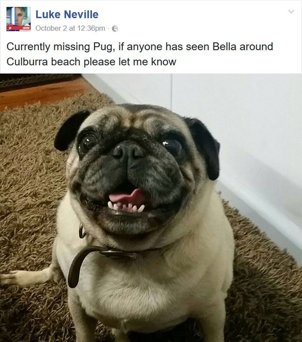 Guy Asks Facebook To Find His Lost Pug, Gets Someone Else's Pug Instead