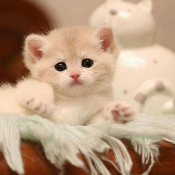 20 chatons trop mignons qui vont vous donner envie de caresser votre écran