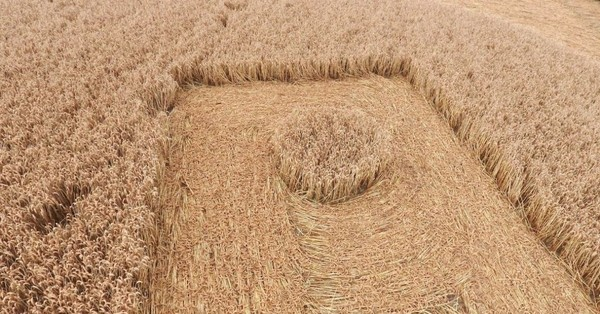 Mystery 180-ft wide 'Nazi crop circle' appears overnight in Wiltshire field