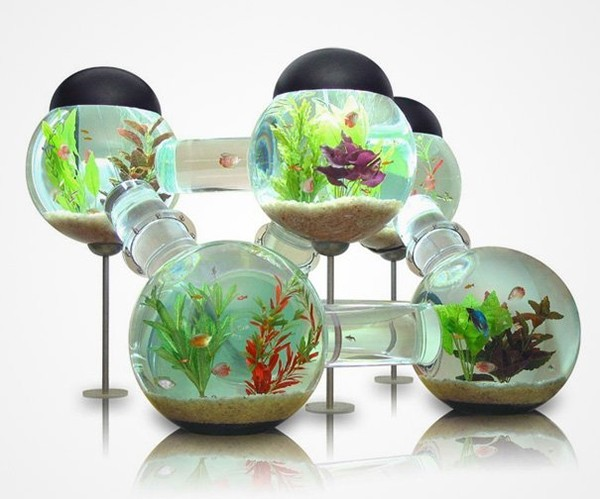 Highly cute creativity of large fish bowl - NICE PLACE TO VISIT