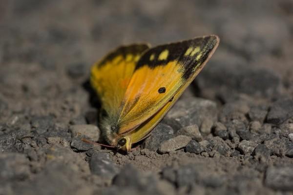Le déclin (très alarmant) des insectes dans le monde