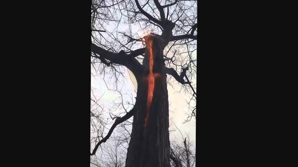 Un arbre ardent découvert: symbole biblique?
