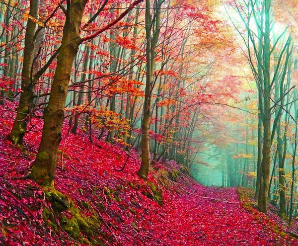 Amazing fantastic beautiful autumn images - NICE PLACE TO VISIT