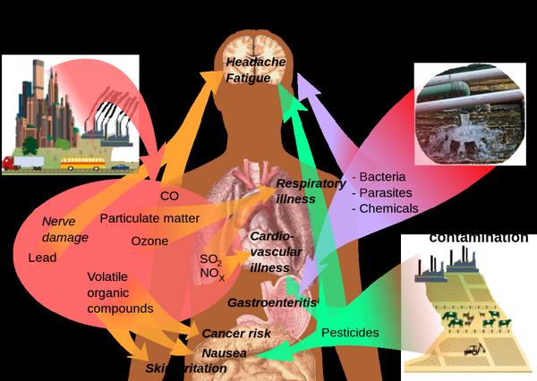 Santé-environnement — Wikipédia