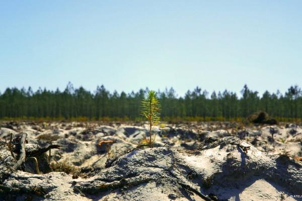 L'exploitation de la forêt est entrée dansladémesure