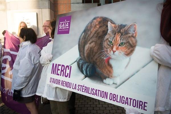 La Région bruxelloise débloque plus de 90.000 euros pour la stérilisation des chats