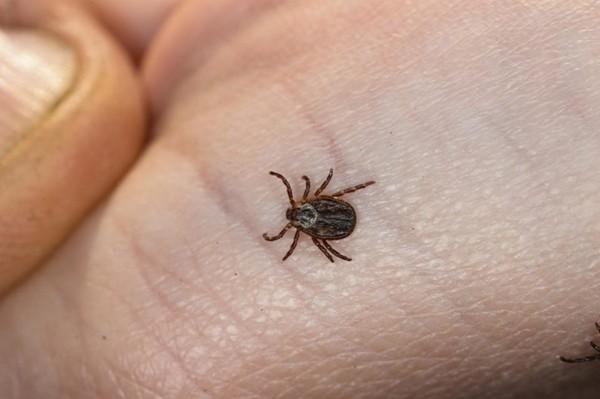 CARTE. Maladie de Lyme : voici les régions les plus touchées par les tiques dangereuses