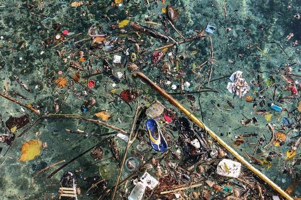 Toxiques pour notre cerveau, les bisphénols sont de plus en plus présents dans l'océan