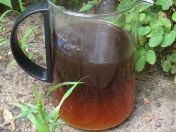 L'urine, un engrais gratuit pour le jardin