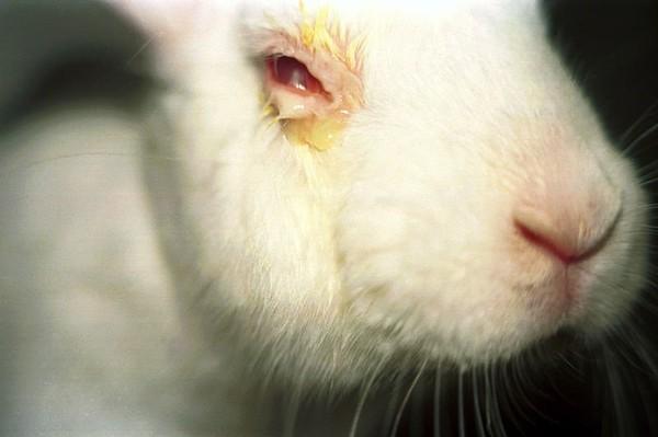 Stop Victoria's Secret Testing on Animals