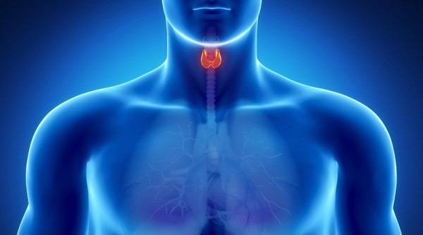 Improve Your Thyroid Gland Function by Eating These Foods - Healthy Food Society