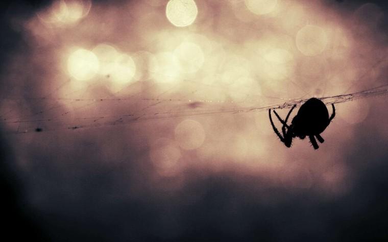 Araignées de maison : pourquoi ne faut-il pas les tuer ?