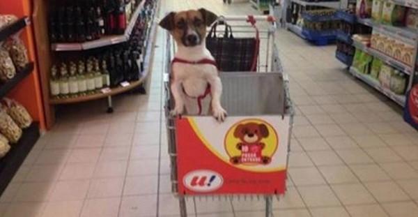 En Italie, vous pouvez faire vos courses accompagné de votre toutou ! Une place dans le caddie lui est réservée !