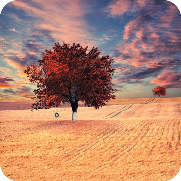 We Must do Something so that Our Future will Thank us for That. - Daily Poetry and Stories Portal   Easy Branches