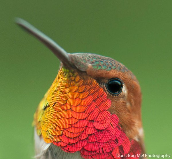 Beautiful images of the Humming birds - NICE PLACE TO VISIT
