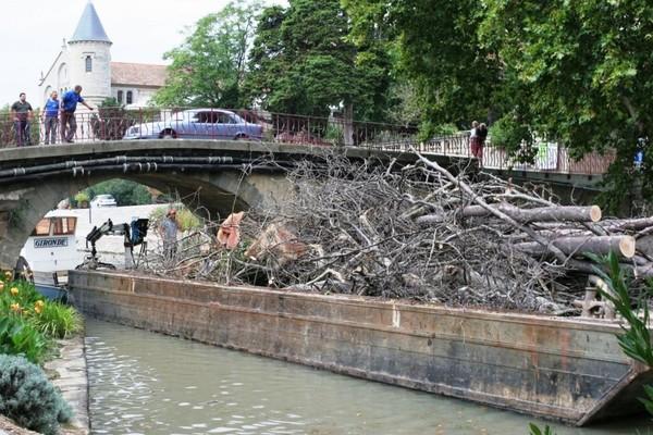 Revue Fluvial Chancre coloré Les platanes quittent le canal du Midi en bateau...