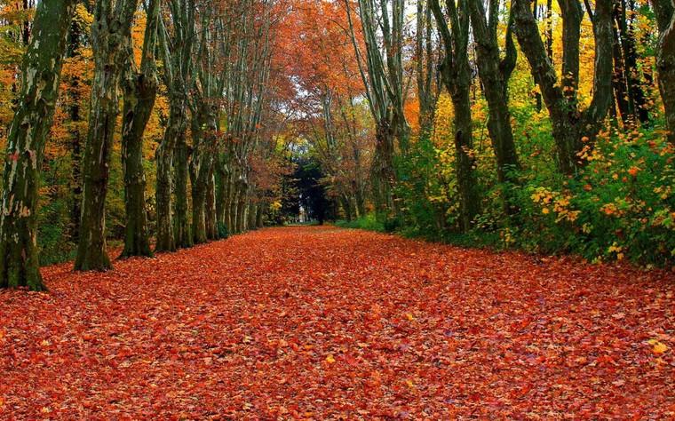 Automne : saison des arbres aux feuilles flamboyantes