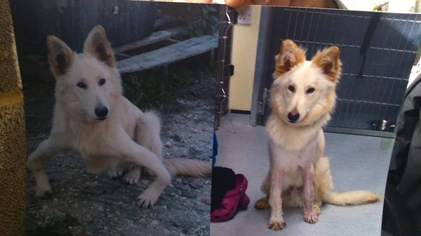 Le sauvetage de Sandy, un chien souffrant d'une grave malformation des pattes