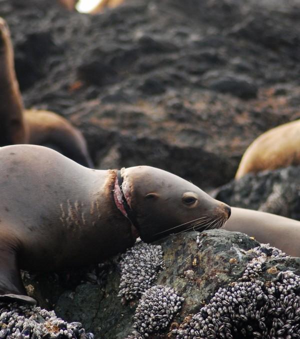 Photo extraite de Ces images effrayantes qui témoignent de l'impact de la pollution des océans sur les animaux...