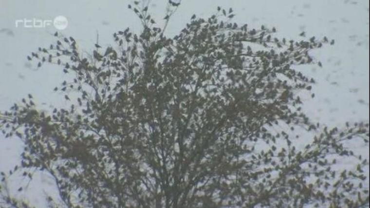 """Exceptionnel: une """"pluie d'oiseaux"""" dans les Ardennes - RTBF Regions"""