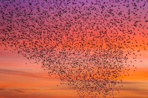 L'alarmante disparition des oiseaux