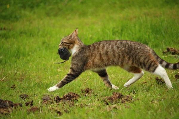 Reporterre sur France Inter: chats, rongeurs, corbeaux... La faune elle aussi touchée par le Covid