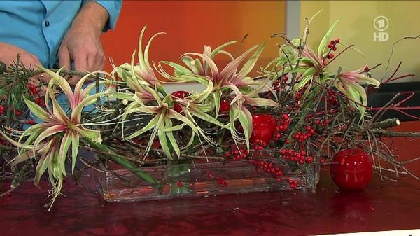 Tischband aus Zweigen mit Mini-Amaryllis - ARD-Buffet :: Kreativ