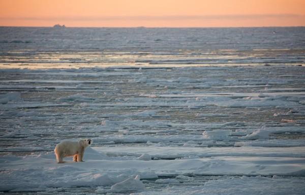 La banquise Arctique aura-t-elle totalement disparu dans un an?