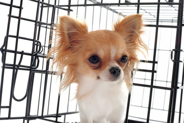 Trafic de chiens : le fléau continue - Fondation 30 Millions d'Amis