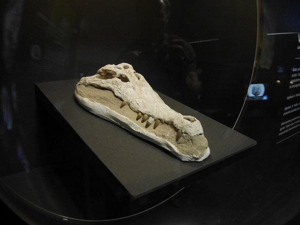 Musée des dinosaures (Dinosfera) à Coll de Nargó, Catalogne | ALL ANDORRA