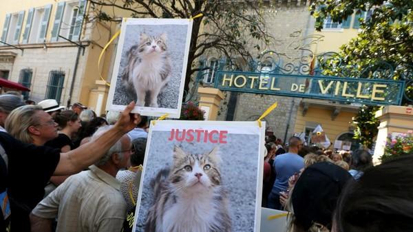 L'auteur présumé de la mort chat Chevelu a avoué - France 3 Provence-Alpes-Côte d'Azur