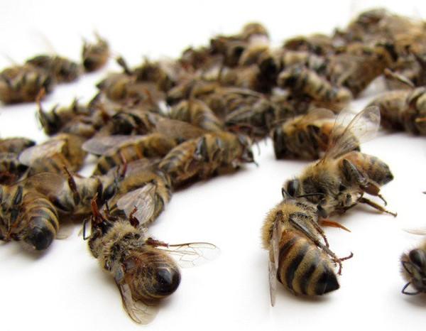 Europe : La fin des pesticides tueurs d'abeilles est à portée de main !