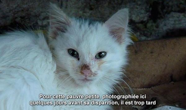 SOS : 22 CHATS EN DANGER DE MORT ! - ClicAnimaux